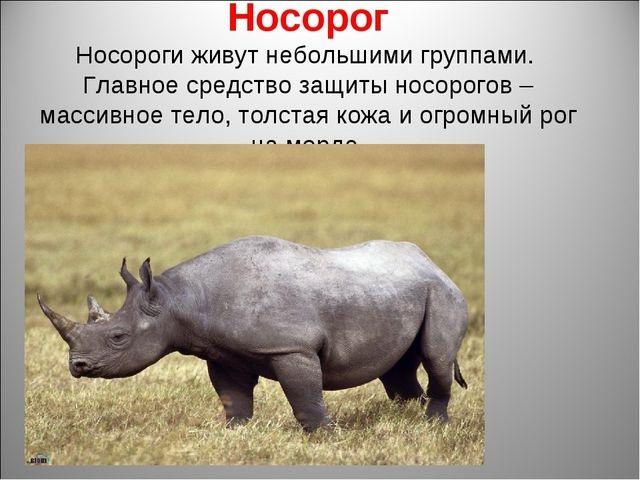 Красивые картинки на тему животный мир (4)
