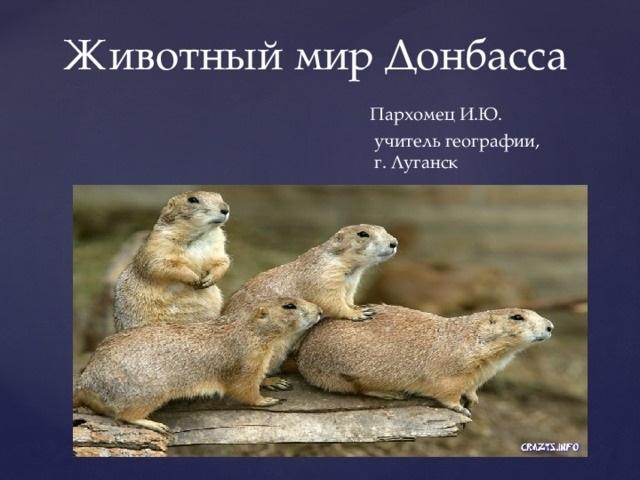 Красивые картинки на тему животный мир (5)