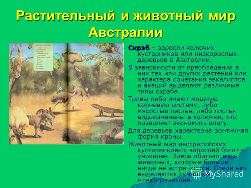 Красивые картинки на тему животный мир (7)