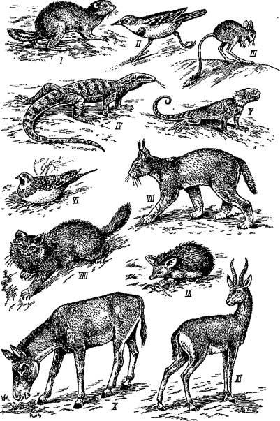 Красивые картинки на тему животный мир (8)