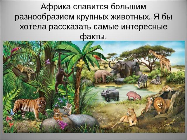 Красивые картинки на тему животный мир (9)