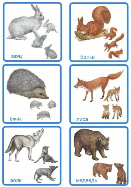 Лесные животные фото для детей (1)