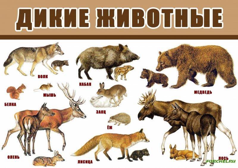 Лесные животные фото для детей (11)