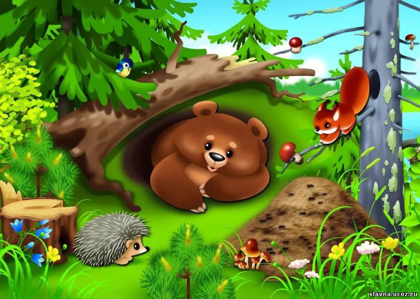 Лесные животные фото для детей (12)