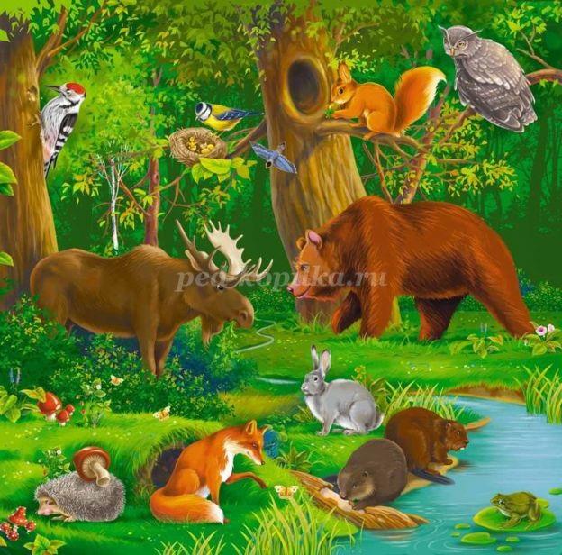 Лесные животные фото для детей (14)