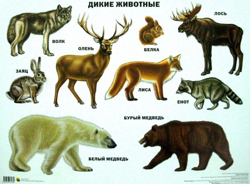 Лесные животные фото для детей (15)