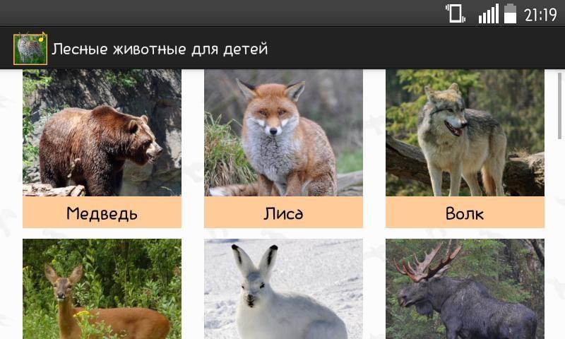 Лесные животные фото для детей (17)