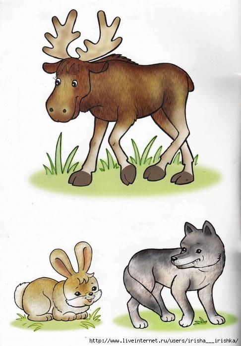 Лесные животные фото для детей (18)