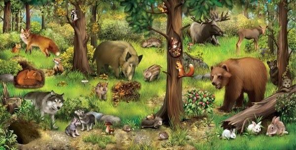 Лесные животные фото для детей (19)