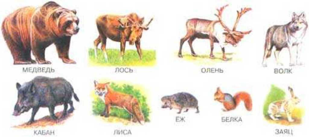Лесные животные фото для детей (2)