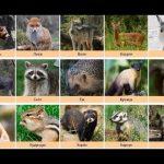 Лесные животные фото для детей