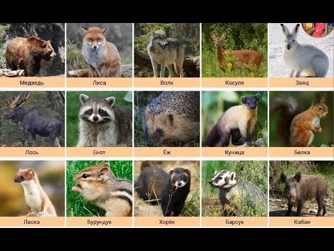 Лесные животные фото для детей (22)