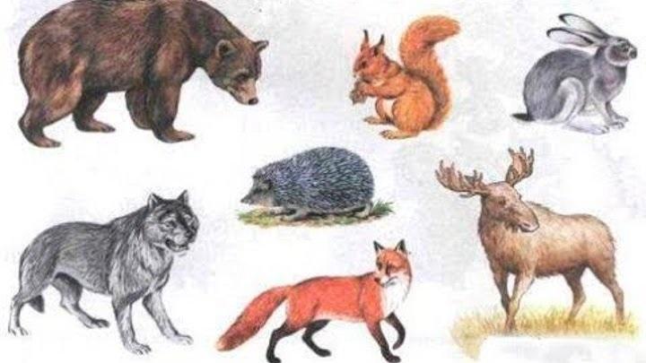Лесные животные фото для детей (23)