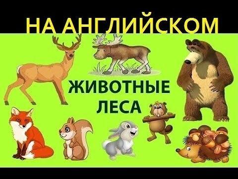 Лесные животные фото для детей (3)