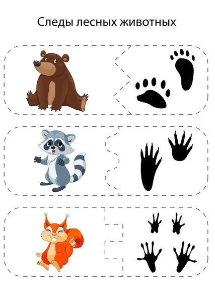 Лесные животные фото для детей (5)