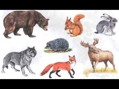 Лесные животные фото для детей (8)