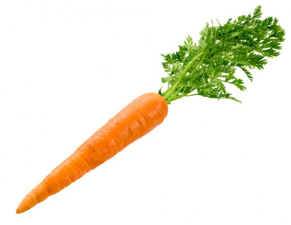 Морковь на белом фоне картинка (16)