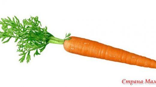Морковь на белом фоне картинка (17)