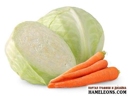 Морковь на белом фоне картинка (3)