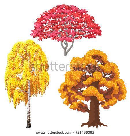 Осенняя береза картинка для детей (9)