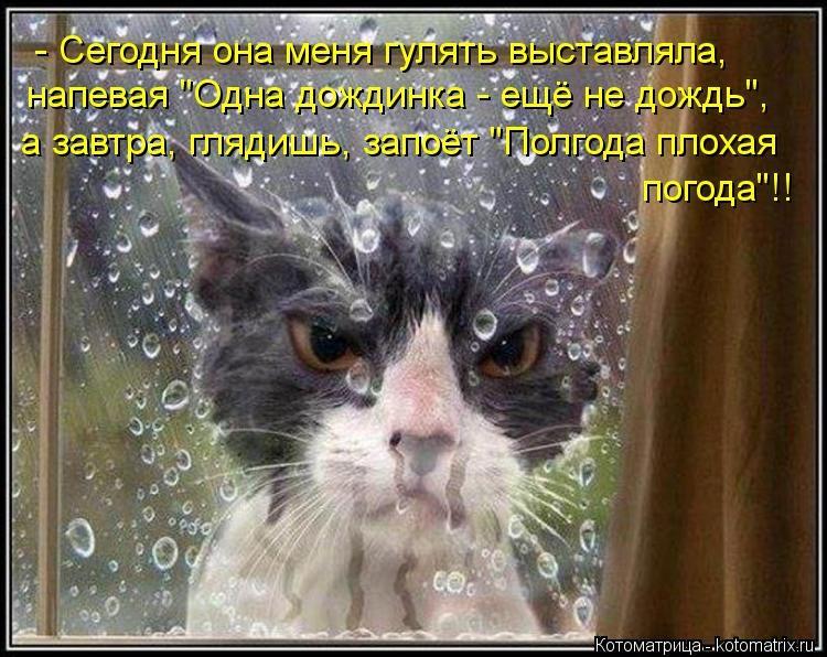 Прикольные и смешные картинки о плохой погоде (13)