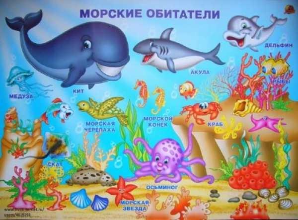 Рисуем морских обитателей с детьми - подборка рисунков (14)