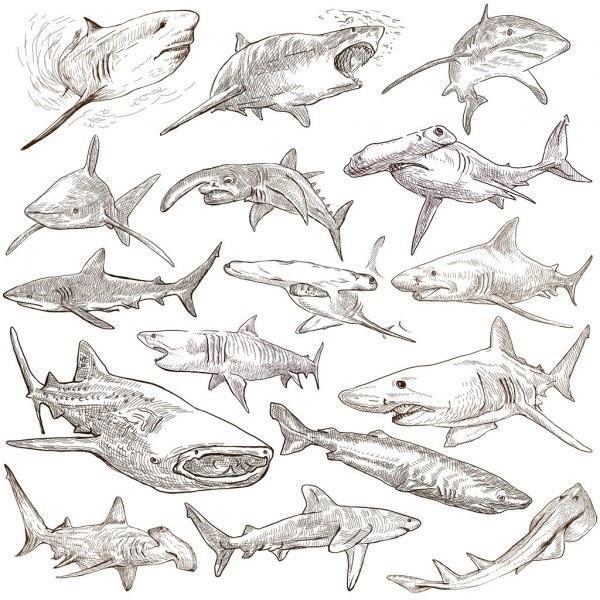 Рисуем морских обитателей с детьми - подборка рисунков (16)