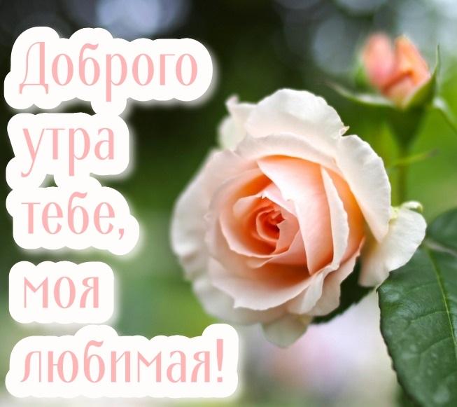 Романтические картинки доброе утро любимая (2)