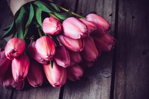 Самые лучшие картинки на телефон тюльпаны (13)