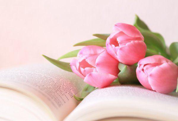 Самые лучшие картинки на телефон тюльпаны (14)
