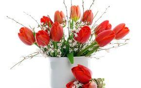 Самые лучшие картинки на телефон тюльпаны (16)