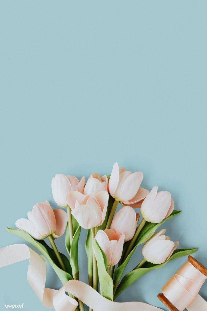 Самые лучшие картинки на телефон тюльпаны (18)