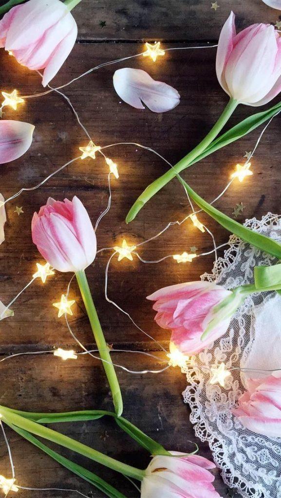Самые лучшие картинки на телефон тюльпаны (19)