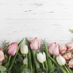 Самые лучшие картинки на телефон тюльпаны