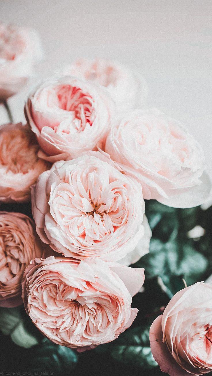 Самые лучшие картинки на телефон тюльпаны (22)