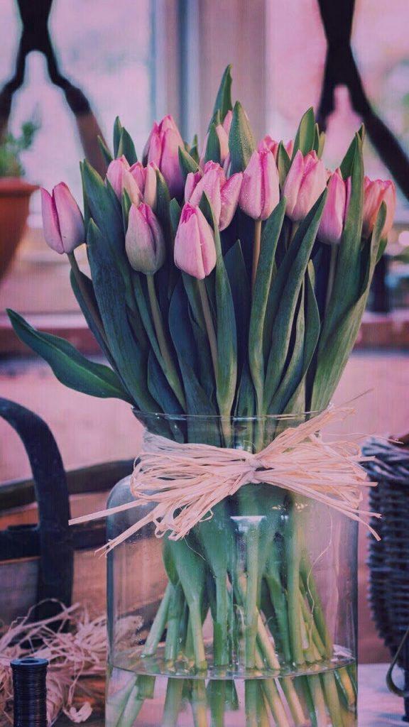 Самые лучшие картинки на телефон тюльпаны (23)