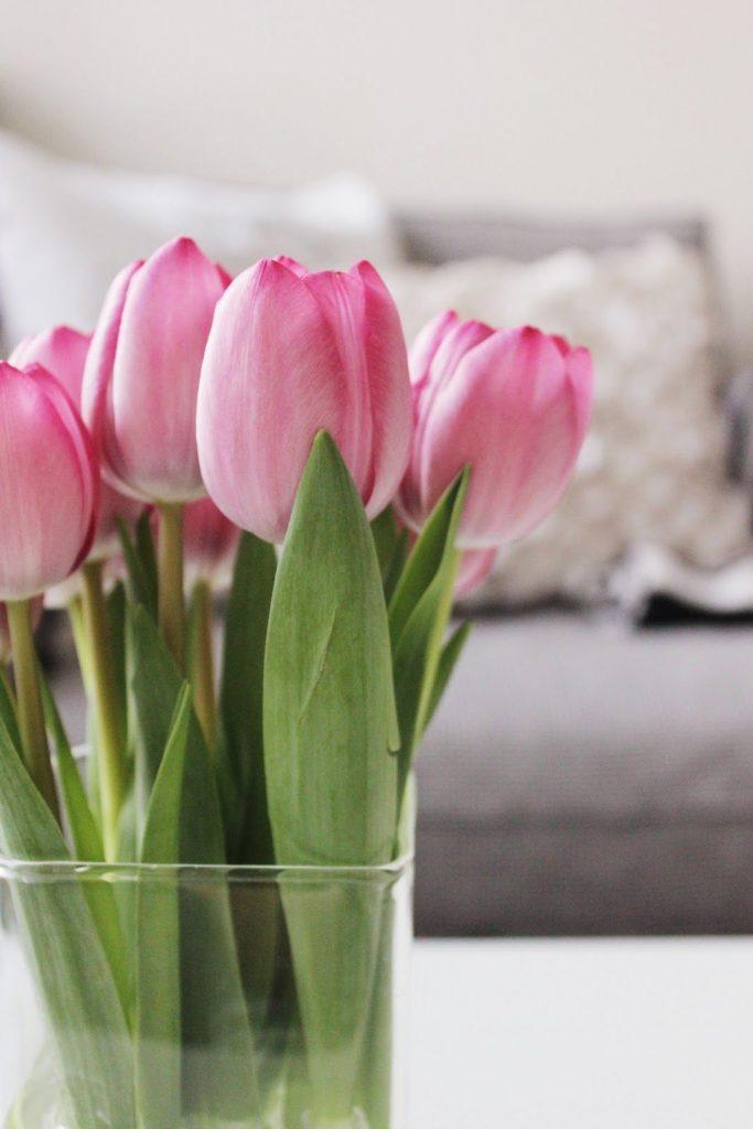 Самые лучшие картинки на телефон тюльпаны (24)