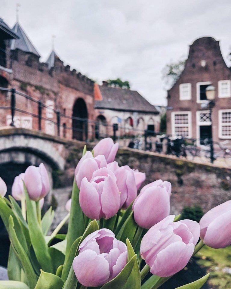 Самые лучшие картинки на телефон тюльпаны (27)