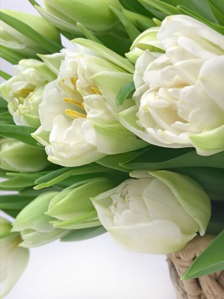 Самые лучшие картинки на телефон тюльпаны (4)