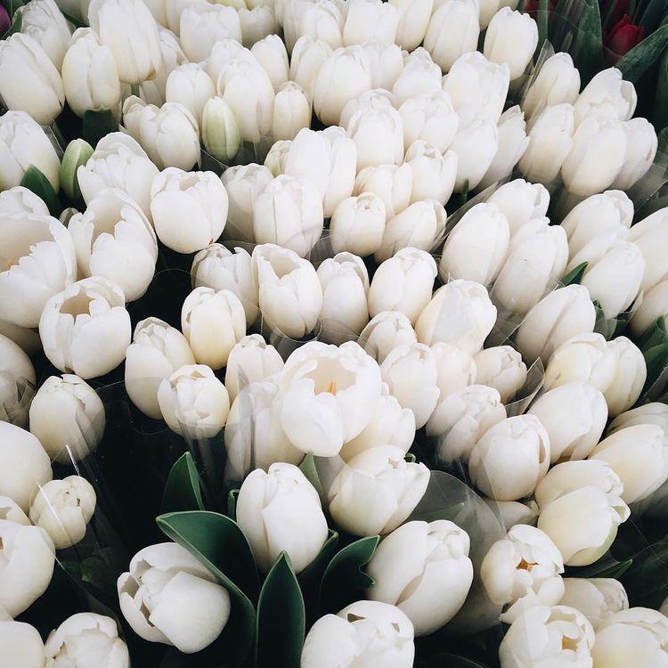 Самые лучшие картинки на телефон тюльпаны (5)