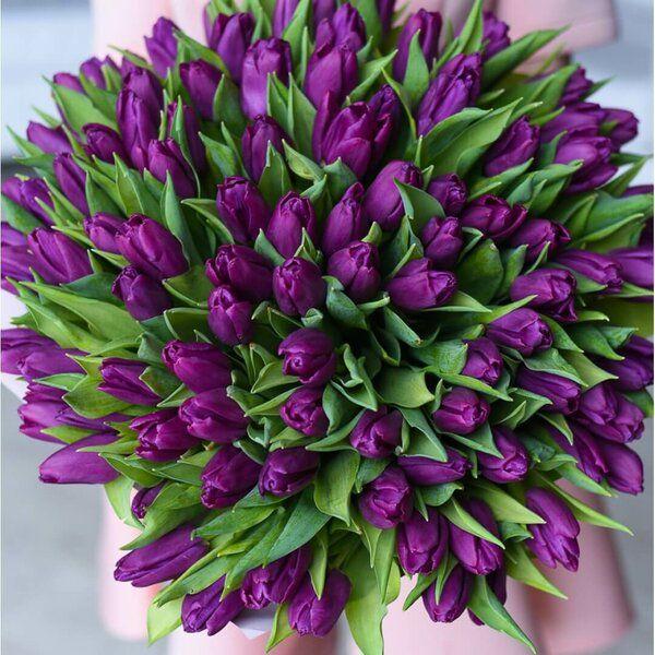 Самые лучшие картинки на телефон тюльпаны (6)