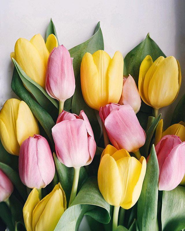 Самые лучшие картинки на телефон тюльпаны (7)