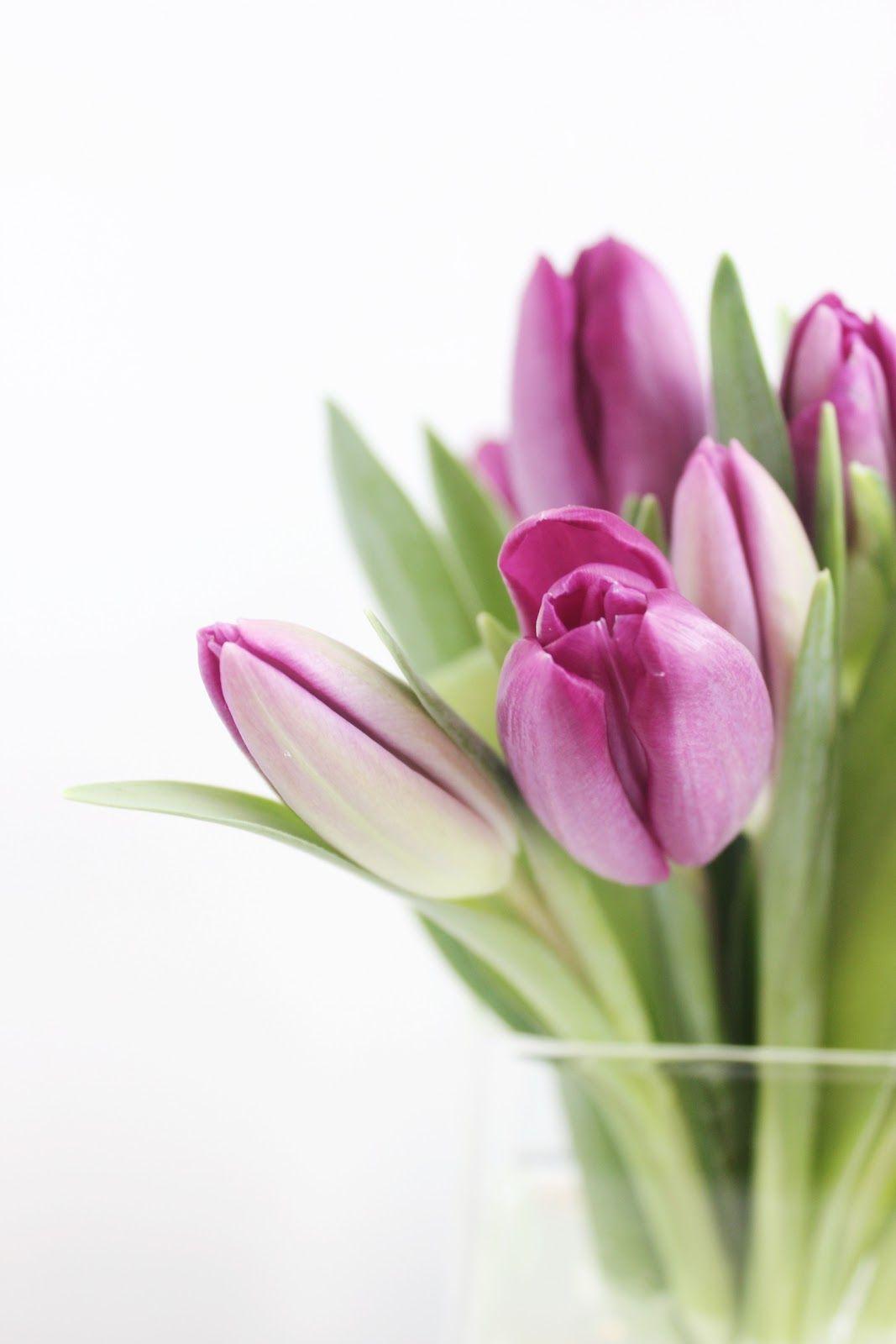 Самые лучшие картинки на телефон тюльпаны (9)