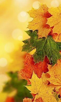Скачать картинки на телефон Осень (13)