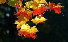Скачать картинки на телефон Осень (15)