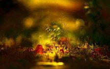 Скачать картинки на телефон Осень (16)