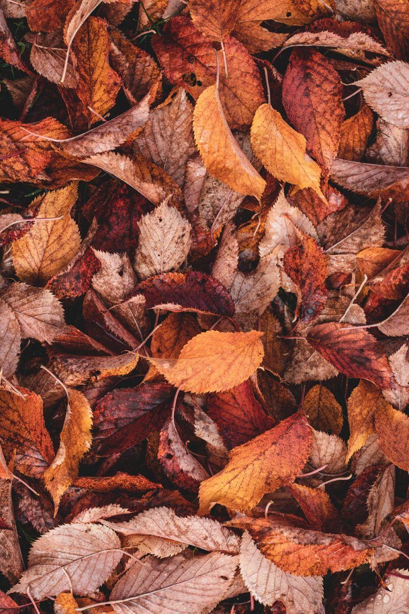 Скачать картинки на телефон Осень (18)