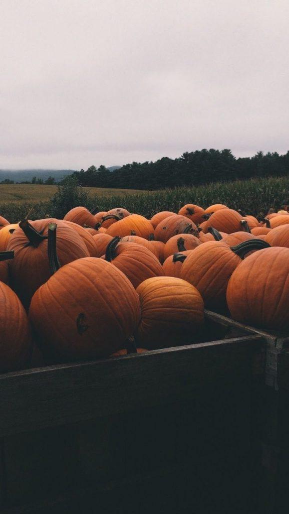 Скачать картинки на телефон Осень (8)