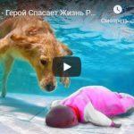Собака спасает хозяина — удивительные видео ролики