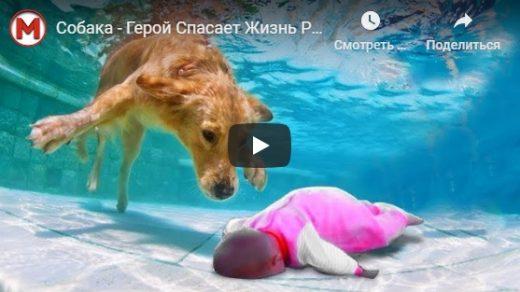 Собака спасает хозяина   удивительные видео ролики